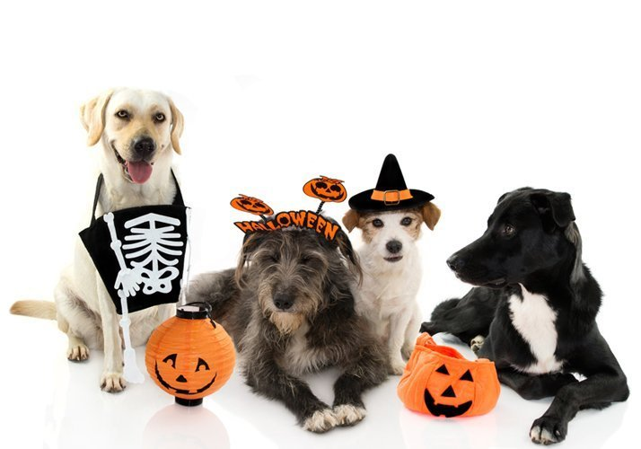 Doggy Halloween Costume Party